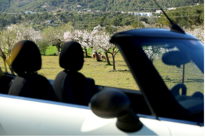 Almond trees in bloom - Ibiza
